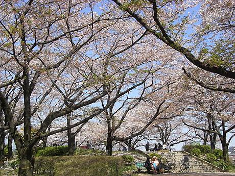 目撃!緑の桜が咲いた@隅田公園