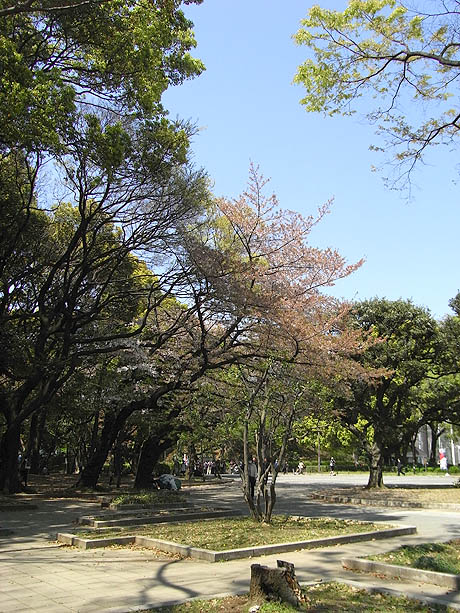 上野サクラ探検隊終了!ありがとう上野公園!