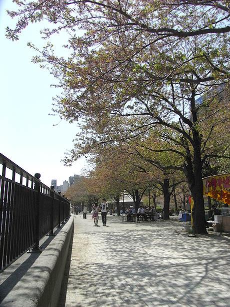 意外にまだお花見できた隅田公園