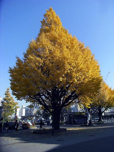 紅葉が美しい上野公園の初冬