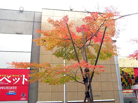 そこは上野の森美術館の前でした。